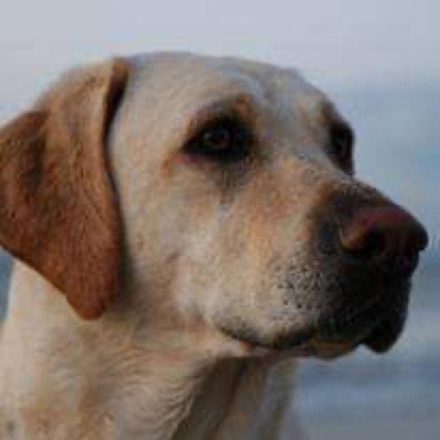 Obraz zawierający pies, brązowy, siedzi, patrzenie Opis wygenerowany automatycznie