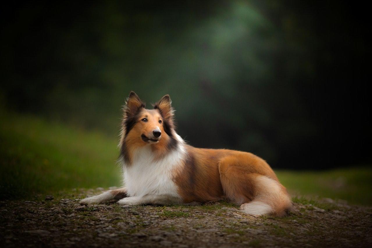 Obraz zawierający pies, brązowy, ssak, siedzi Opis wygenerowany automatycznie