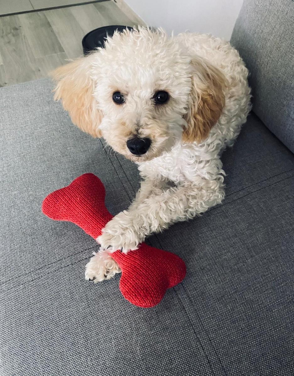 Obraz zawierający pies, wewnątrz, małe, siedzi Opis wygenerowany automatycznie