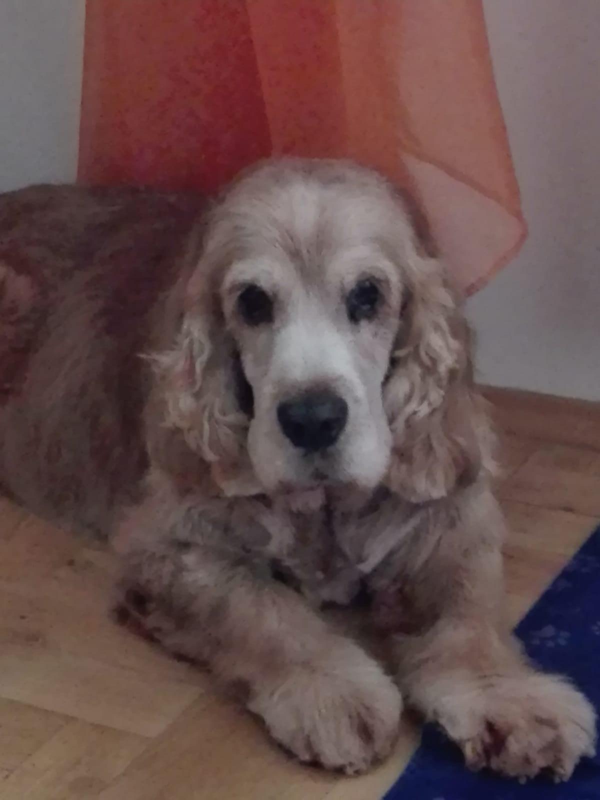 Obraz zawierający pies, wewnątrz, siedzi, leżące Opis wygenerowany automatycznie
