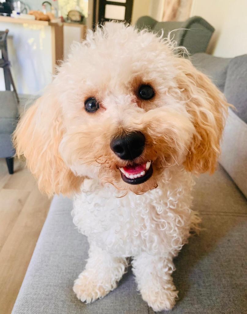 Obraz zawierający pies, wewnątrz, siedzi, małe Opis wygenerowany automatycznie