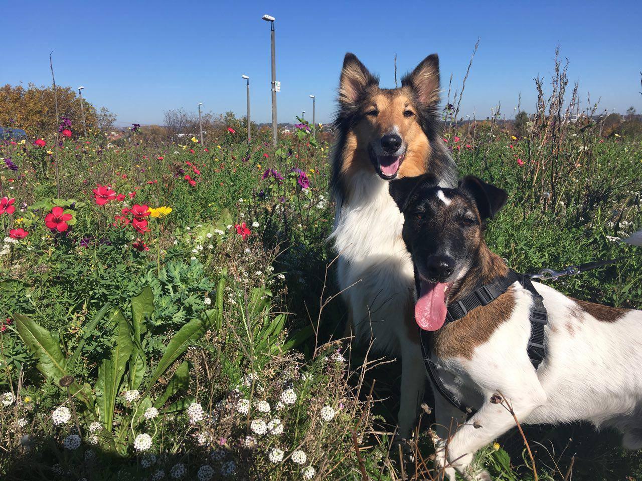 Obraz zawierający pies, zewnętrzne, trawa, siedzi Opis wygenerowany automatycznie