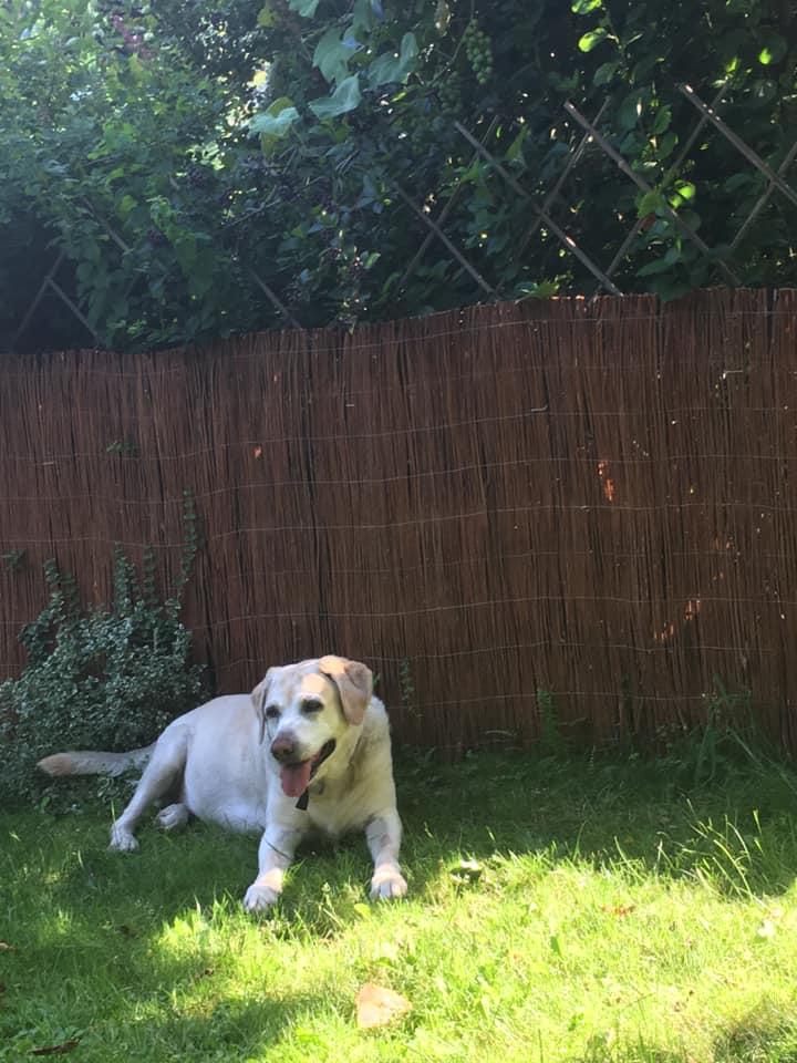Obraz zawierający trawa, zewnętrzne, pies, płot Opis wygenerowany automatycznie