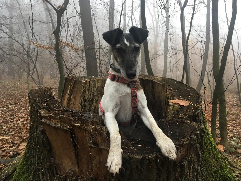 Obraz zawierający zewnętrzne, ssak, stojące, pies Opis wygenerowany automatycznie