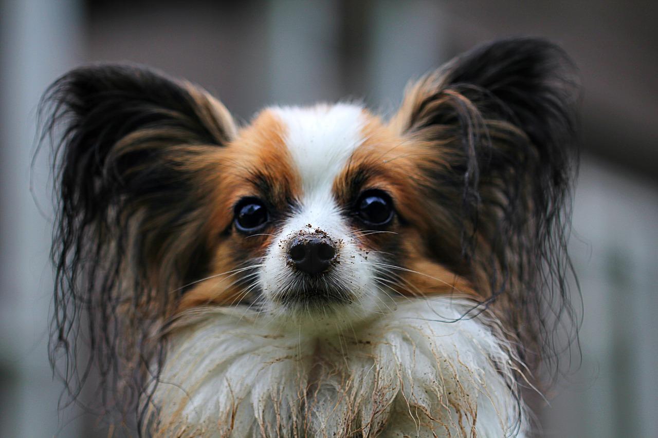 Obraz zawierający pies, ssak, wewnątrz, małe Opis wygenerowany automatycznie