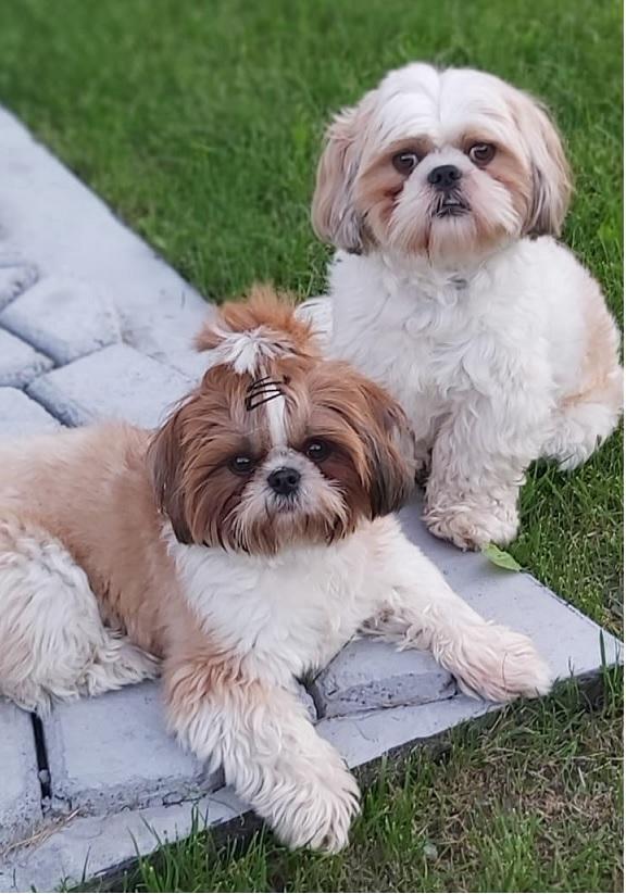 Obraz zawierający pies, trawa, małe, ssak Opis wygenerowany automatycznie