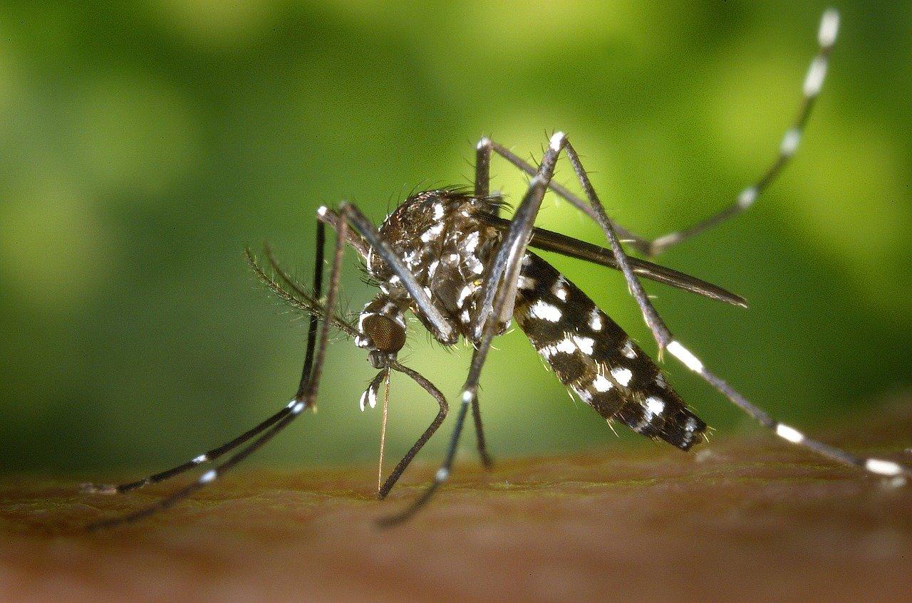 Obraz zawierający pająk, stawonogi, owad Opis wygenerowany automatycznie