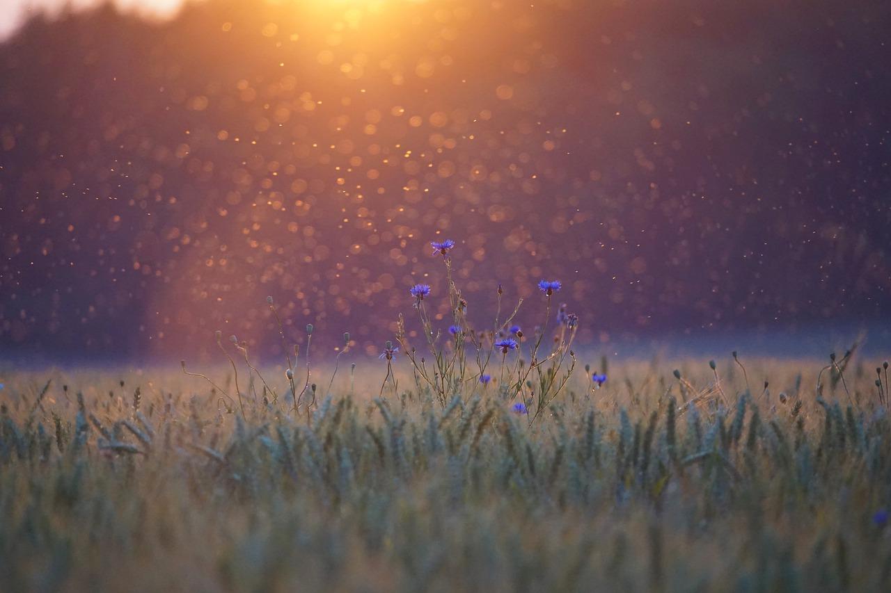 Obraz zawierający przyroda, nocne niebo Opis wygenerowany automatycznie